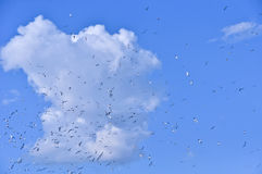 Flock of birds Royalty Free Stock Photos