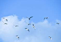 Flock of birds Stock Photos
