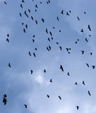 Flock of birds. In sky Stock Image