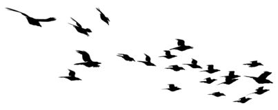 Flock of birds. Silhouetted flock of birds swooping down royalty free illustration