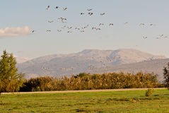 Flock of birds. By mount Hermon, Israel Stock Photo