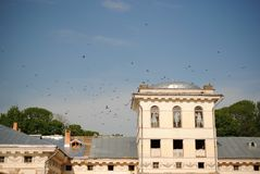 Flock of birds above the castle royalty free stock images