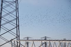 Flock of birds above the high-voltage power line stock photos