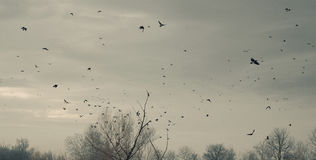 A Flock of Birds Royalty Free Stock Photos