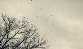 A Flock of Birds Stock Photography