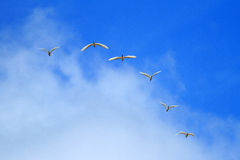 Flock of birds. On against blue sky background Royalty Free Stock Photography