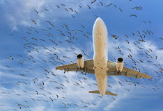 Flock of birds and aircraft Stock Image
