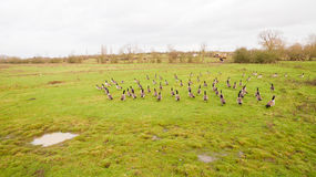 A flock of birds around a lake in Leicestershire Royalty Free Stock Photography