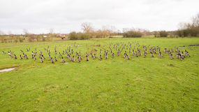 A flock of birds around a lake in Leicestershire Stock Photo