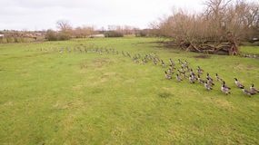 A flock of birds around a lake in Leicestershire Stock Images