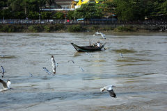 Flock of birds with boat on the river. In Myanmar Royalty Free Stock Image