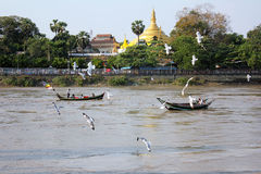 Flock of birds with boat on the river. In Myanmar. View of river side Royalty Free Stock Photos