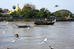 Flock of birds with boat on the river. In Myanmar. View of river side Royalty Free Stock Photography