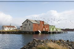 Flock of birds and boathouse on the Lofoten Islands Norway Royalty Free Stock Images