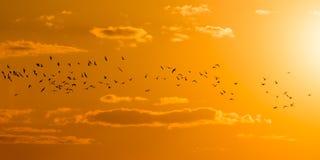 A flock of birds at dawn, the sun Stock Photography