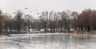 Flock of birds flew up on the ice lake and snowy forest landscap Stock Images