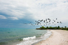 Flock of birds flies before the storm over the lake Stock Photo