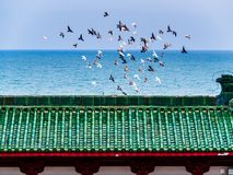 A flock of birds in flight above the roof of a Chinese temple stock photos