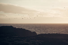 Flock of birds fly over grey sea in evening. Flock of birds fly over grey sea or ocean water surface along dark mountain coast in evening on dusky sky background Stock Photography