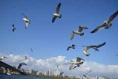 Flock Of Birds Flying Stock Image