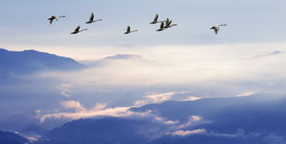 Flock of birds flying above the mountains Stock Photography