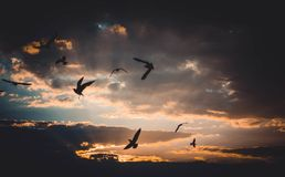Flock of Birds Flying Above Sky during Sunset Stock Images