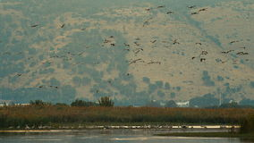 Flock of birds is flying above water stock video footage