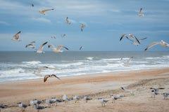 Flock of birds flying along the coastline of Amelia Island, Florida. A noticeable bunch of birds were seen gliding in Atlantic coast royalty free stock image
