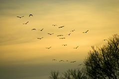 A flock of birds flying in the autumn behind the sun stock photography