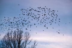 A flock of birds flying away stock image
