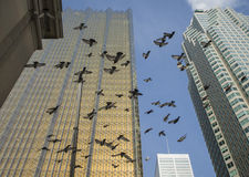 Flock of birds flying in a city Stock Images