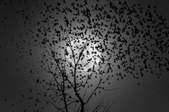 Flock of birds flying in the moonlight Stock Images
