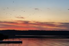 Flock of birds flying over lake in sun direction during at sunset. Beautiful colorful scenic dusk with dramatic sky and seagulls o. Ver river royalty free stock photo
