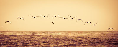 Flock of birds flying over sea Royalty Free Stock Photos