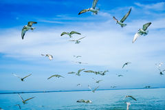Flock of birds. Flying in the sky, in the Gulf of Thailand Stock Photos