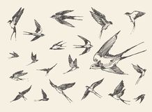 Flock birds flying swallows drawn vector sketch Stock Photography
