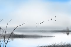 Flock of birds and fog over the canal in the morning. Flock of flying birds in the fog over the canal in the morning countryside Stock Photography