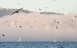 Flock of birds in front Foggy City Skyline Stock Image