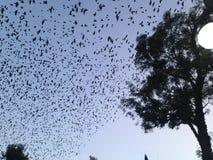Flock of birds Royalty Free Stock Photography