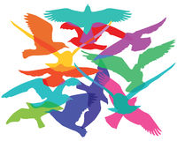 Flock of birds. Illustration of colorful flock of birds on white background Royalty Free Stock Images