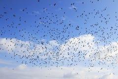 Flock of birds Stock Photos
