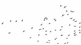 Flock of birds. Isolated flock of birds Royalty Free Stock Photography