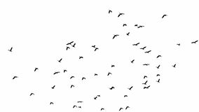 Flock of birds. Isolated flock of birds Royalty Free Stock Images
