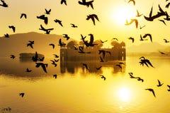 A flock of birds at Jai Mahal Stock Image