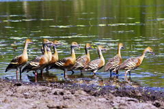 A flock of birds in Kakadu National Park Stock Images