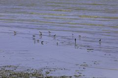 A flock of birds that live in wetland area near the sea Stock Photos