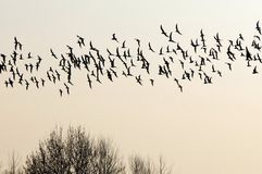 Flock of birds migrating south. Royalty Free Stock Photos
