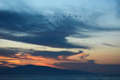 Flock of birds in the morning. Flock of birds flying across the cloudy sky at sunrise Stock Photos