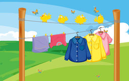 A flock of birds near the hanging clothes Royalty Free Stock Photos