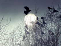 Flock of birds. Night in the forest, flock of birds Stock Photos